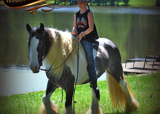 009-Swagger-Black-Tobiano-Gypsy-Vanner-Gelding-For-Sale