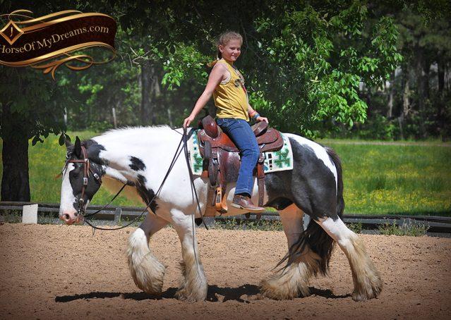 010-Charley-Gypsy-Vanner-Gelding-kids-beginner-gelding-for-sale-black-white-paint
