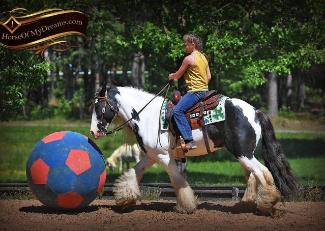 011-Charley-Gypsy-Vanner-Gelding-kids-beginner-gelding-for-sale-black-white-paint