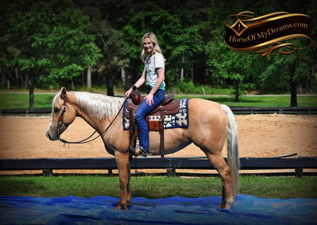 011-Montana-AQHA-Palomino-Mare-Voodoo-Dr-Reining-Reiner-for-sale-trails-parades