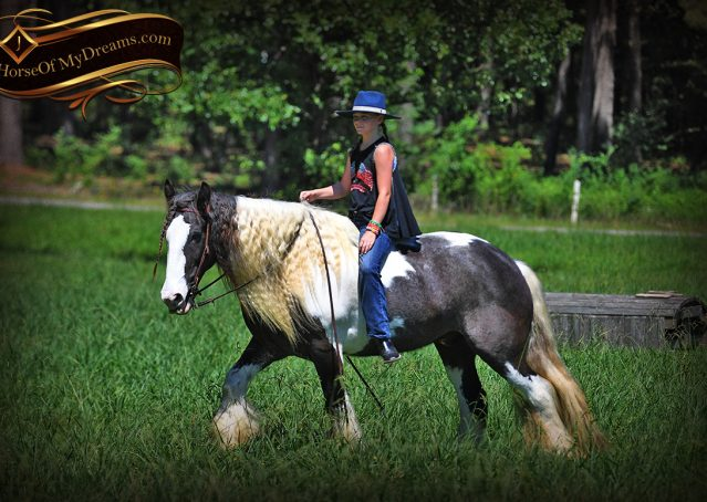 011-Swagger-Black-Tobiano-Gypsy-Vanner-Gelding-For-Sale