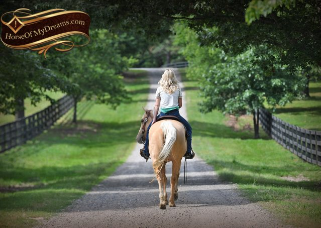 012-Montana-AQHA-Palomino-Mare-Voodoo-Dr-Reining-Reiner-for-sale-trails-parades