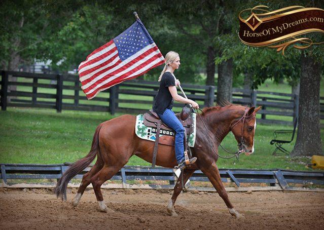 013-Trinity-AQHA-Sorrel-NRHA-Reiner-Reining-Ranch-Riding-Trail-Gelding-For-Sale