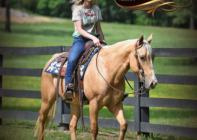 014-Montana-AQHA-Palomino-Mare-Voodoo-Dr-Reining-Reiner-for-sale-trails-parades