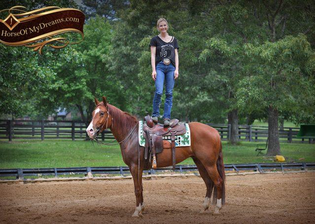 014-Trinity-AQHA-Sorrel-NRHA-Reiner-Reining-Ranch-Riding-Trail-Gelding-For-Sale