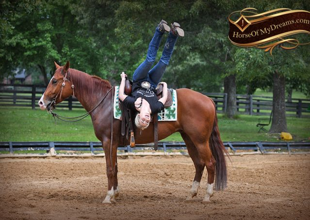 015-Trinity-AQHA-Sorrel-NRHA-Reiner-Reining-Ranch-Riding-Trail-Gelding-For-Sale