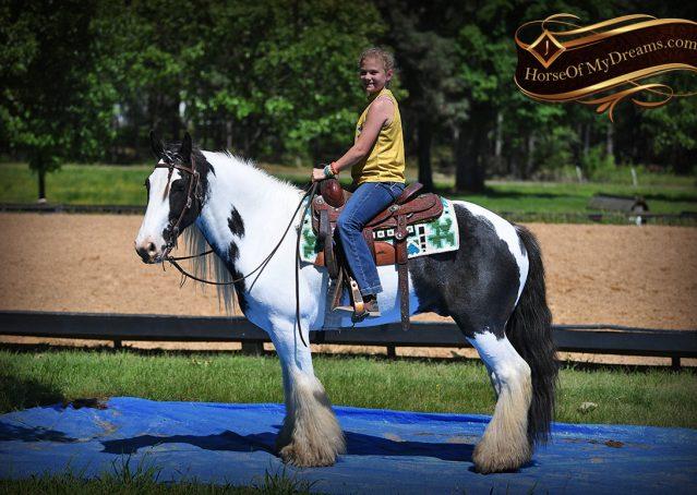 016-Charley-Gypsy-Vanner-Gelding-kids-beginner-gelding-for-sale-black-white-paint