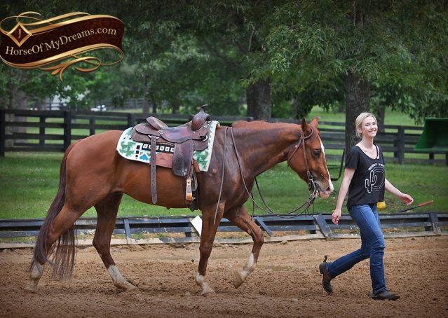 016-Trinity-AQHA-Sorrel-NRHA-Reiner-Reining-Ranch-Riding-Trail-Gelding-For-Sale