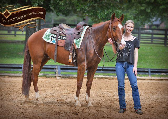 017-Trinity-AQHA-Sorrel-NRHA-Reiner-Reining-Ranch-Riding-Trail-Gelding-For-Sale