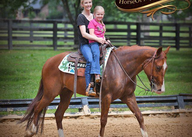 018-Trinity-AQHA-Sorrel-NRHA-Reiner-Reining-Ranch-Riding-Trail-Gelding-For-Sale
