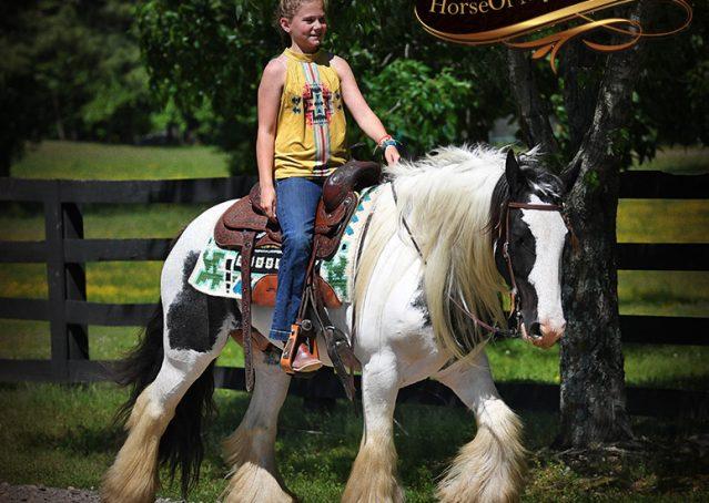 019-Charley-Gypsy-Vanner-Gelding-kids-beginner-gelding-for-sale-black-white-paint