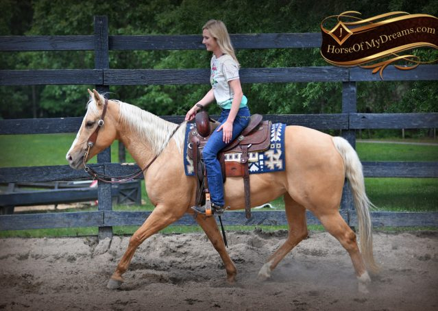 019-Montana-AQHA-Palomino-Mare-Voodoo-Dr-Reining-Reiner-for-sale-trails-parades