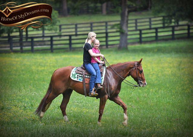 019-Trinity-AQHA-Sorrel-NRHA-Reiner-Reining-Ranch-Riding-Trail-Gelding-For-Sale