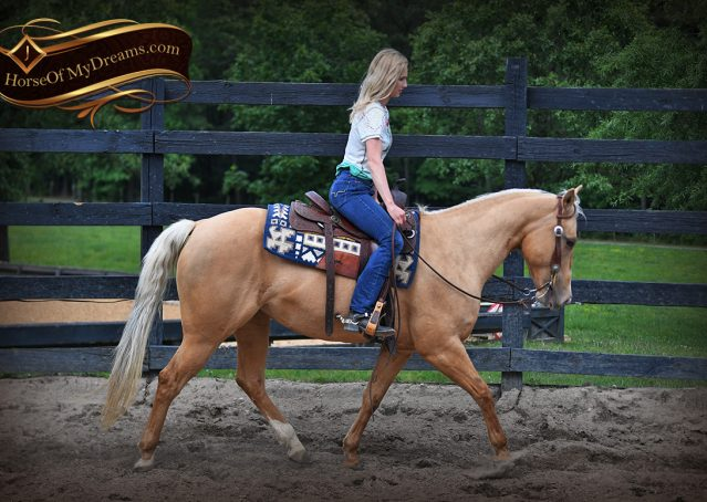 020-Montana-AQHA-Palomino-Mare-Voodoo-Dr-Reining-Reiner-for-sale-trails-parades