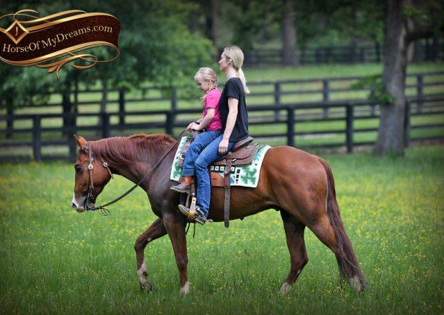 020-Trinity-AQHA-Sorrel-NRHA-Reiner-Reining-Ranch-Riding-Trail-Gelding-For-Sale