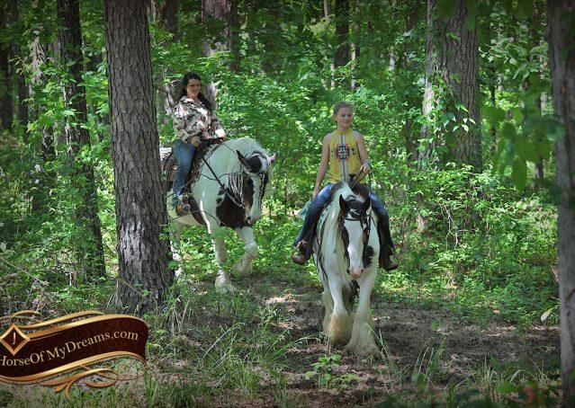 021-Charley-Gypsy-Vanner-Gelding-kids-beginner-gelding-for-sale-black-white-paint