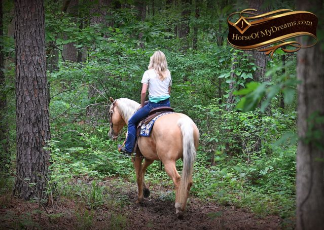 021-Montana-AQHA-Palomino-Mare-Voodoo-Dr-Reining-Reiner-for-sale-trails-parades