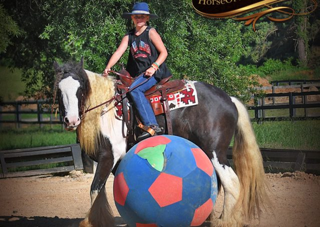 021-Swagger-Black-Tobiano-Gypsy-Vanner-Gelding-For-Sale