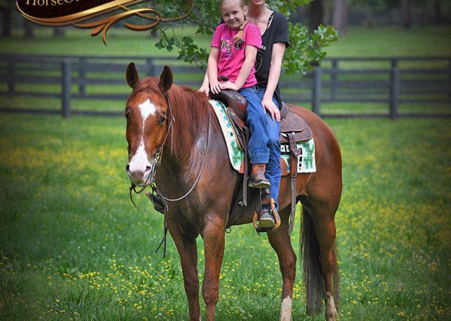 021-Trinity-AQHA-Sorrel-NRHA-Reiner-Reining-Ranch-Riding-Trail-Gelding-For-Sale
