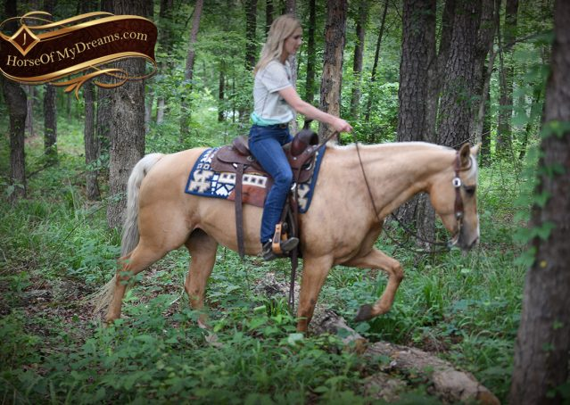 022-Montana-AQHA-Palomino-Mare-Voodoo-Dr-Reining-Reiner-for-sale-trails-parades
