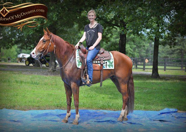 022-Trinity-AQHA-Sorrel-NRHA-Reiner-Reining-Ranch-Riding-Trail-Gelding-For-Sale
