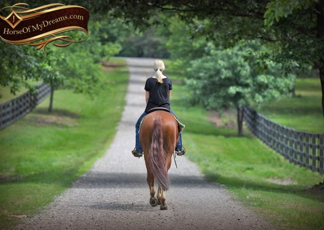 023-Trinity-AQHA-Sorrel-NRHA-Reiner-Reining-Ranch-Riding-Trail-Gelding-For-Sale