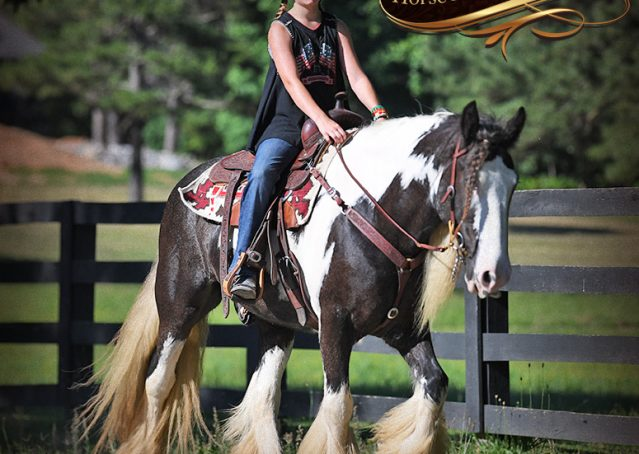 025-Swagger-Black-Tobiano-Gypsy-Vanner-Gelding-For-Sale