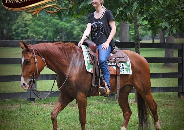 025-Trinity-AQHA-Sorrel-NRHA-Reiner-Reining-Ranch-Riding-Trail-Gelding-For-Sale