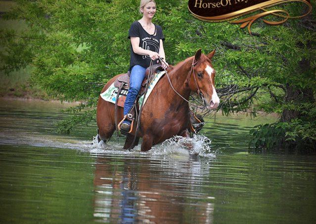 026-Trinity-AQHA-Sorrel-NRHA-Reiner-Reining-Ranch-Riding-Trail-Gelding-For-Sale