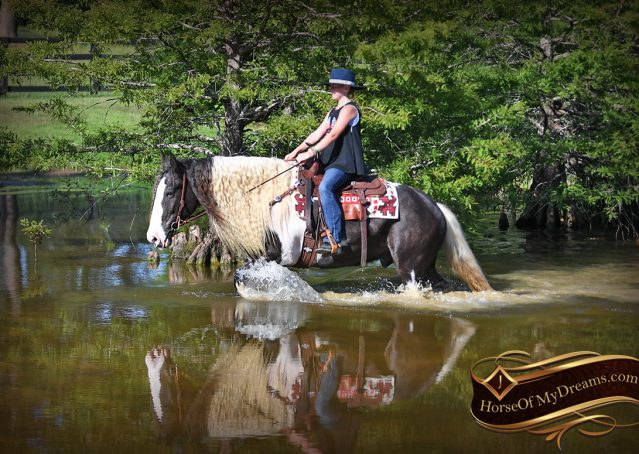 027-Swagger-Black-Tobiano-Gypsy-Vanner-Gelding-For-Sale