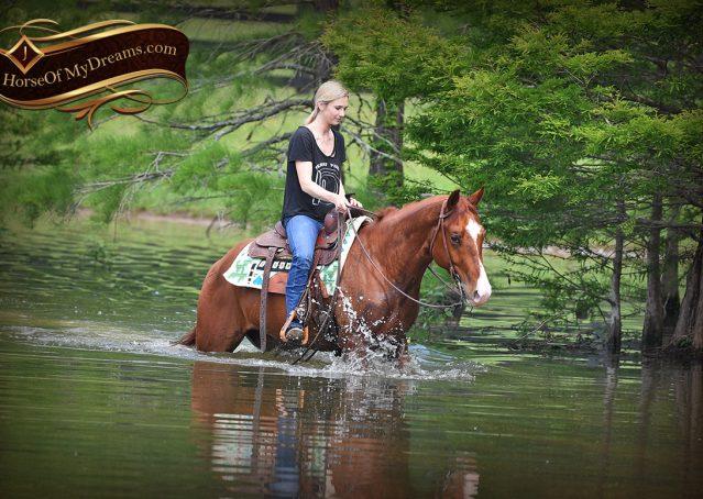 027-Trinity-AQHA-Sorrel-NRHA-Reiner-Reining-Ranch-Riding-Trail-Gelding-For-Sale