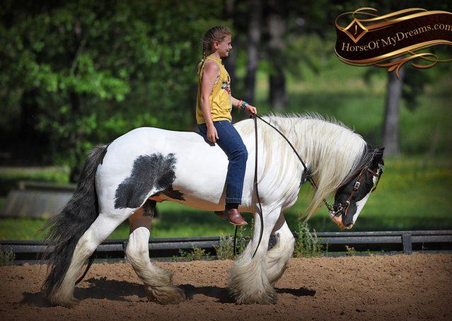 028-Charley-Gypsy-Vanner-Gelding-kids-beginner-gelding-for-sale-black-white-paint