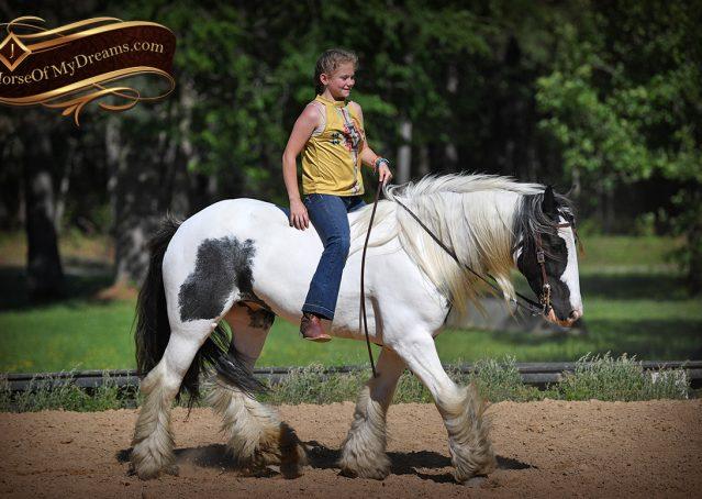 029-Charley-Gypsy-Vanner-Gelding-kids-beginner-gelding-for-sale-black-white-paint