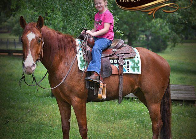 029-Trinity-AQHA-Sorrel-NRHA-Reiner-Reining-Ranch-Riding-Trail-Gelding-For-Sale