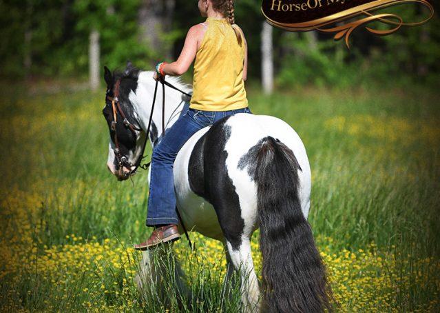 030-Charley-Gypsy-Vanner-Gelding-kids-beginner-gelding-for-sale-black-white-paint
