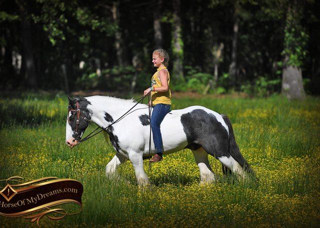 031-Charley-Gypsy-Vanner-Gelding-kids-beginner-gelding-for-sale-black-white-paint
