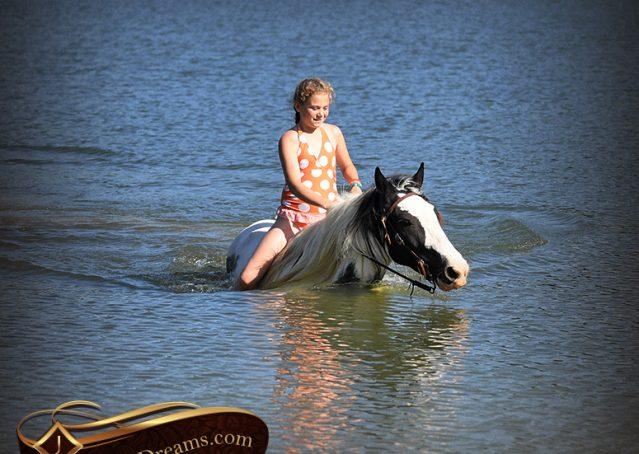 035-Charley-Gypsy-Vanner-Gelding-kids-beginner-gelding-for-sale-black-white-paint