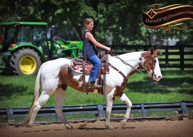 001-Cocoa-APHA-Sorrel-Tobiano-Roping-Team-heading-healing-beginner-horse-for-sale