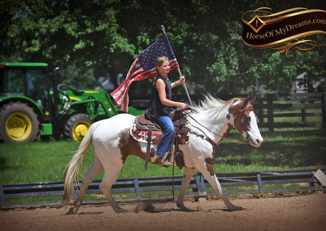 002-Cocoa-APHA-Sorrel-Tobiano-Roping-Team-heading-healing-beginner-horse-for-sale