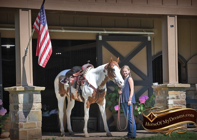 007-Cocoa-APHA-Sorrel-Tobiano-Roping-Team-heading-healing-beginner-horse-for-sale