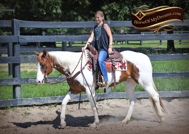 008-Cocoa-APHA-Sorrel-Tobiano-Roping-Team-heading-healing-beginner-horse-for-sale