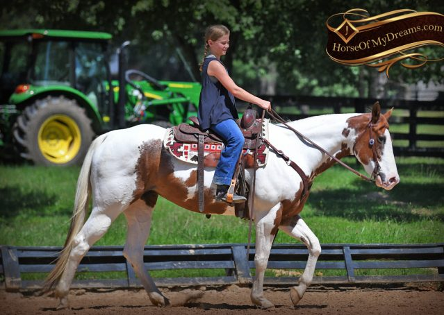 010-Cocoa-APHA-Sorrel-Tobiano-Roping-Team-heading-healing-beginner-horse-for-sale