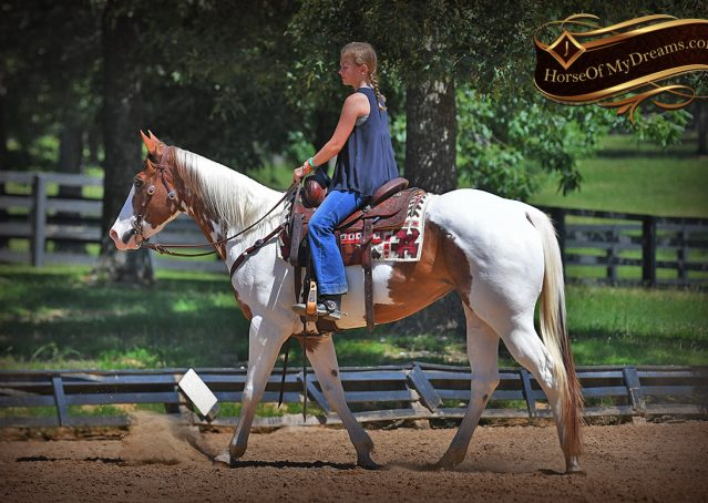 011-Cocoa-APHA-Sorrel-Tobiano-Roping-Team-heading-healing-beginner-horse-for-sale