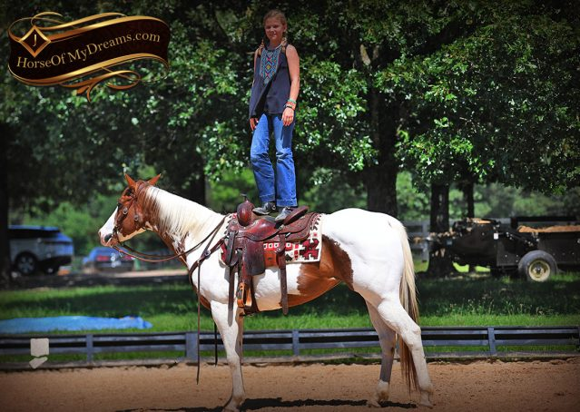 012-Cocoa-APHA-Sorrel-Tobiano-Roping-Team-heading-healing-beginner-horse-for-sale