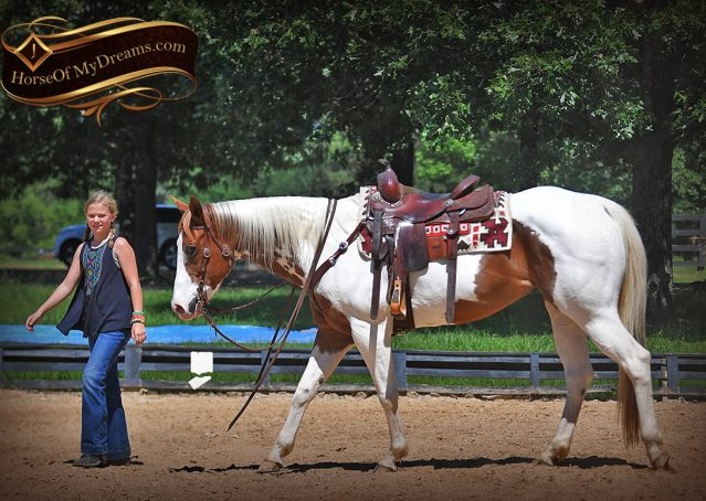 014-Cocoa-APHA-Sorrel-Tobiano-Roping-Team-heading-healing-beginner-horse-for-sale