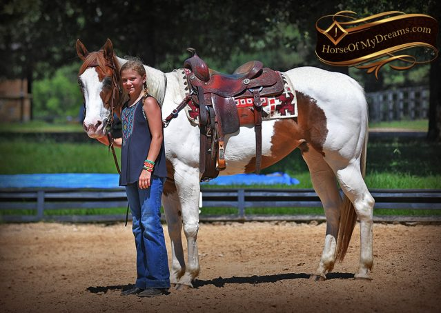 015-Cocoa-APHA-Sorrel-Tobiano-Roping-Team-heading-healing-beginner-horse-for-sale