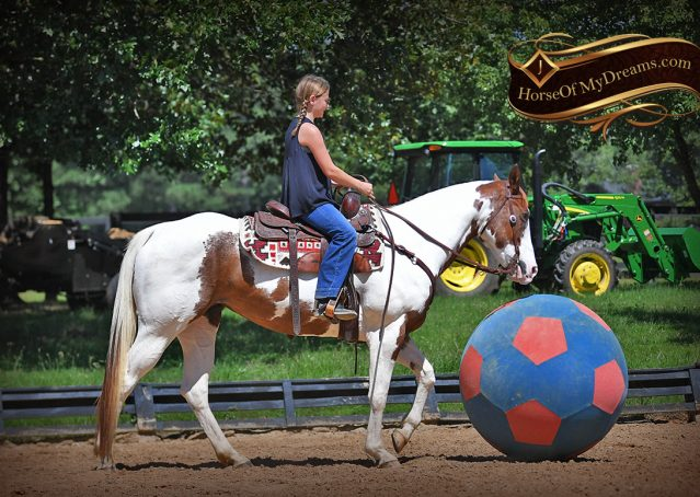 017-Cocoa-APHA-Sorrel-Tobiano-Roping-Team-heading-healing-beginner-horse-for-sale