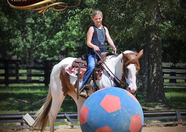 018-Cocoa-APHA-Sorrel-Tobiano-Roping-Team-heading-healing-beginner-horse-for-sale