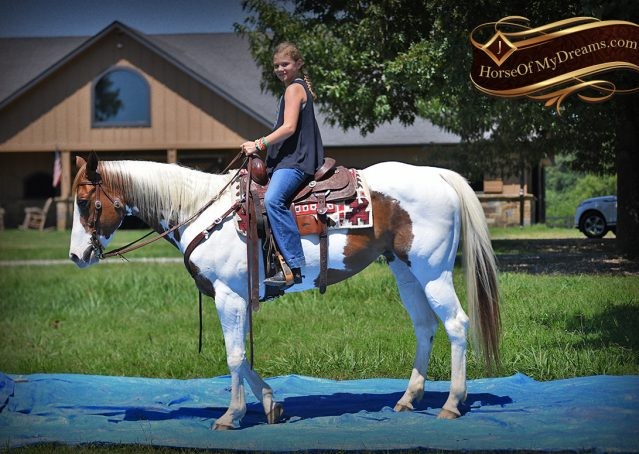 020-Cocoa-APHA-Sorrel-Tobiano-Roping-Team-heading-healing-beginner-horse-for-sale