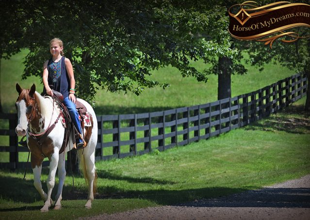 023-Cocoa-APHA-Sorrel-Tobiano-Roping-Team-heading-healing-beginner-horse-for-sale